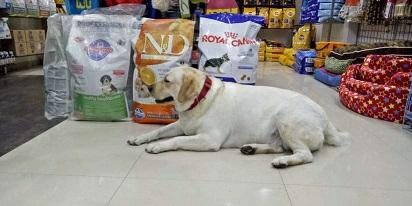 Pets World Pet Shop Noida